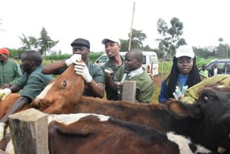 Herd Health Community Outreach - Uasin Gishu